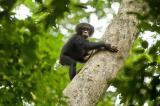 Screenshot van Chimpanzee